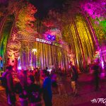 Electric Forest (Photo/Anthony Norkus)